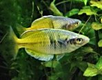 Tropical Fish Caresheets