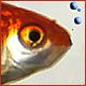 CarrotFish