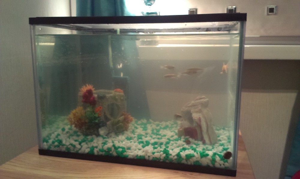 Fishkeeping - New Tank Setup - Fish Dying [Forums - Coldwater - Help ...