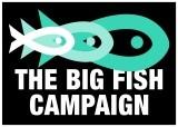 Big Fish Campaign