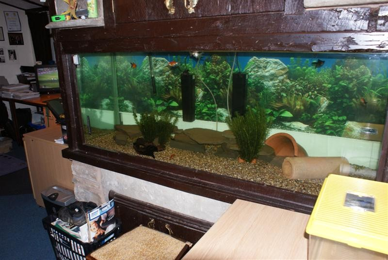Sealing a leaking tank general information fishkeeping for How to fix a leaking fish tank