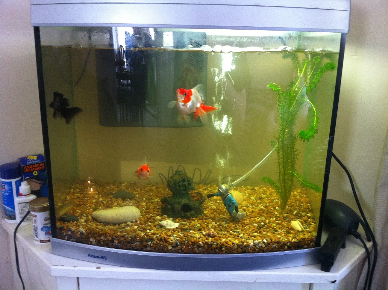 Fishkeeping - Little schools of cold water fish [Forums - Coldwater - Help and Advice]