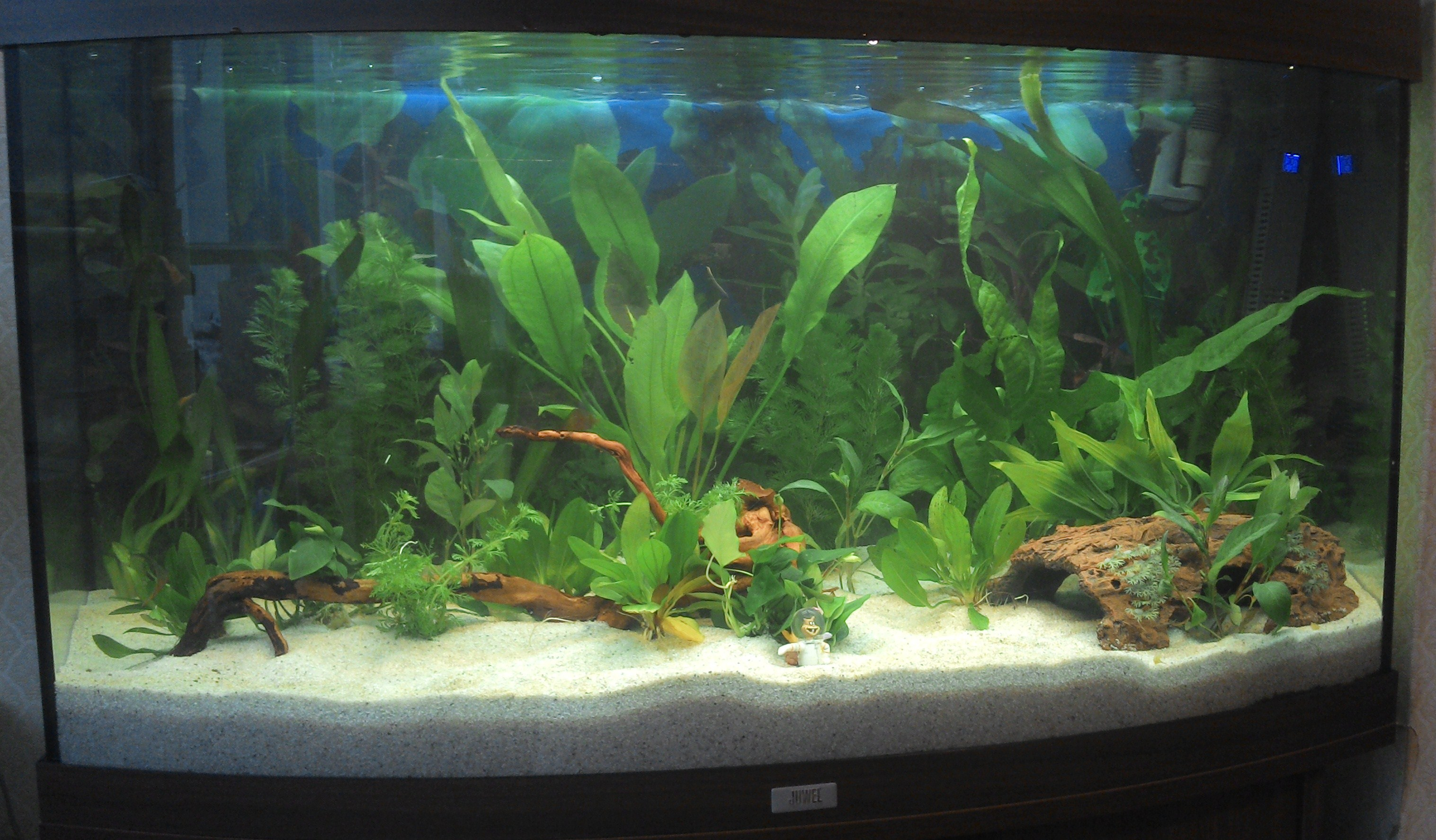 ... CO2 plants and cleaning prior to planting. [Forums - Aquarium Plants