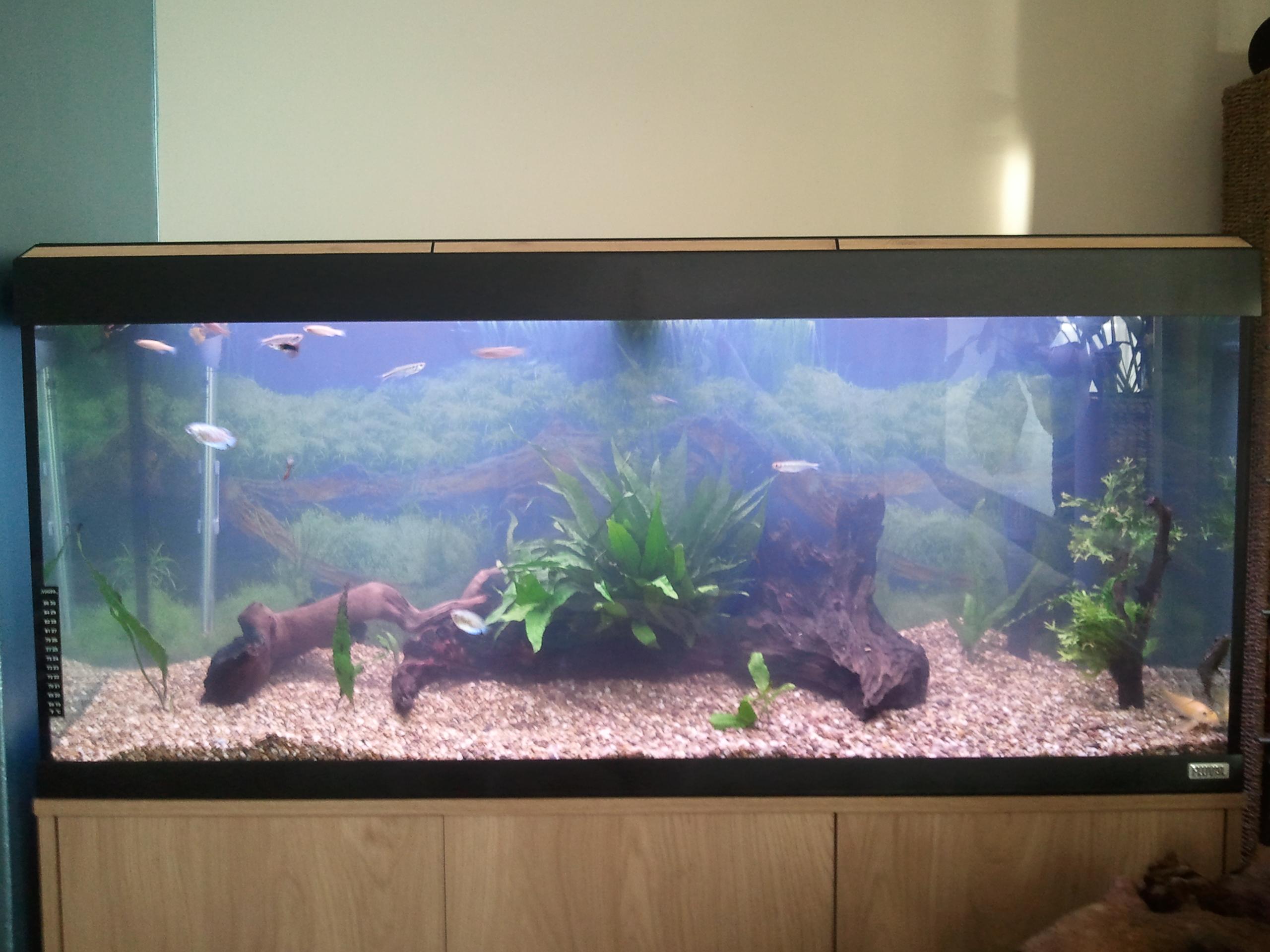 Einzigartig Aquarium Roma 240