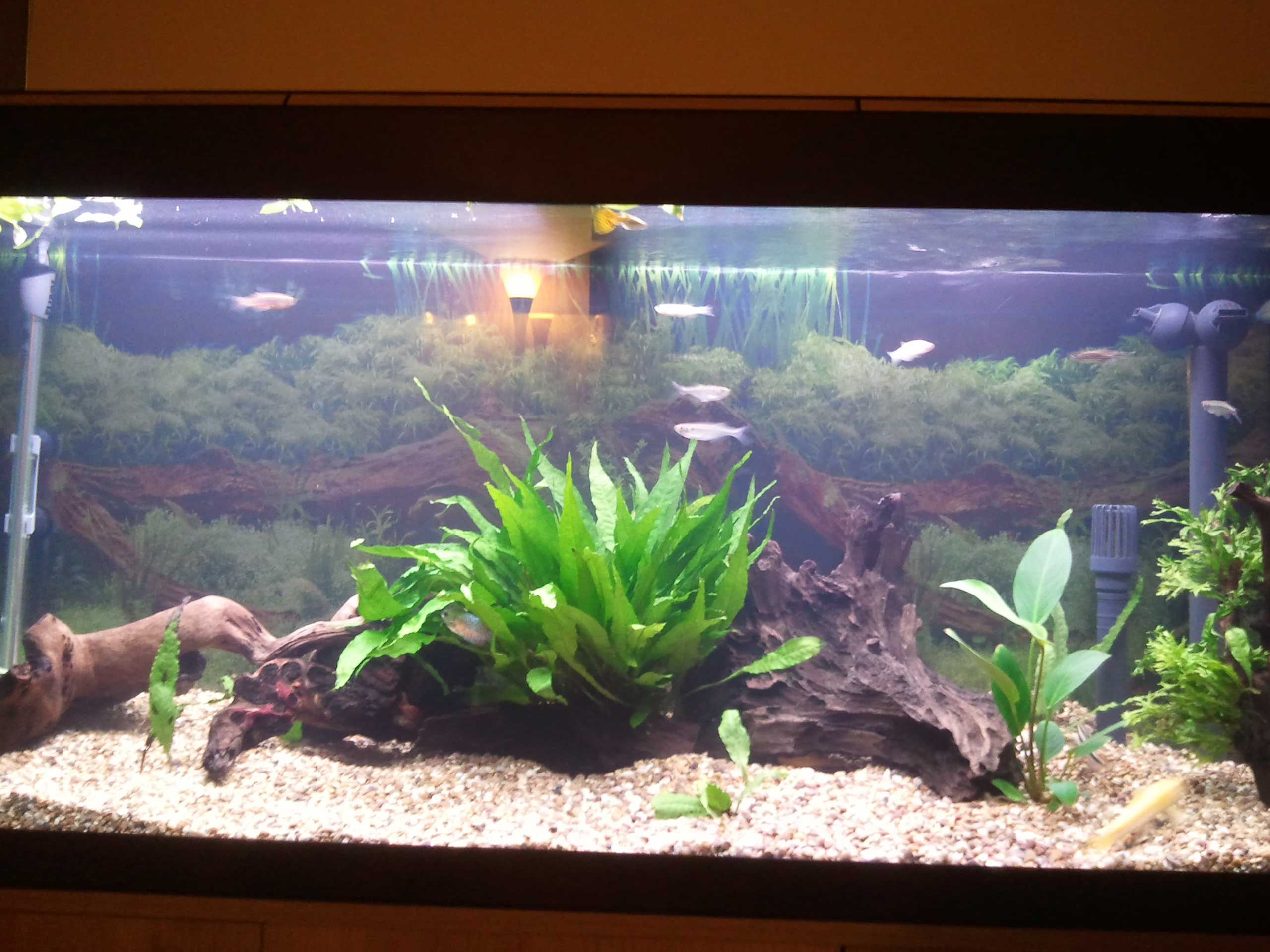 Fluval roma 240 aquarium fish tank - 9204_4cb21f1b7ab8a Jpg 2560x1920 Px