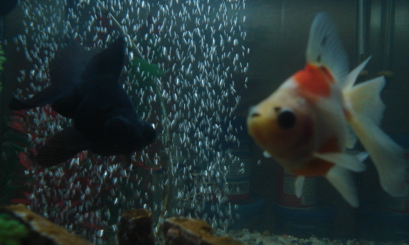 My other two fish