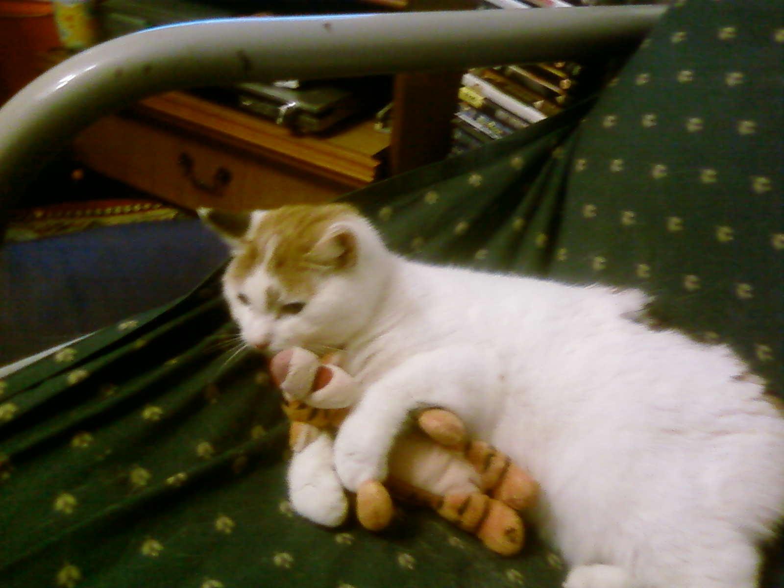 kat's cassie cat