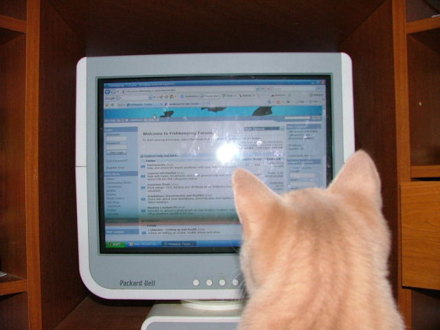 Cat likes fishkeeping.co.uk