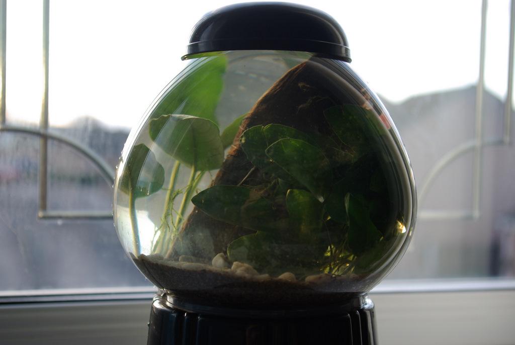 Bubble gum tank 3