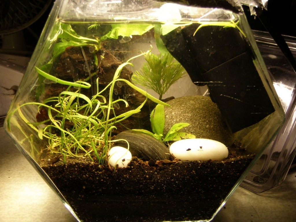 Ducks' micro tank