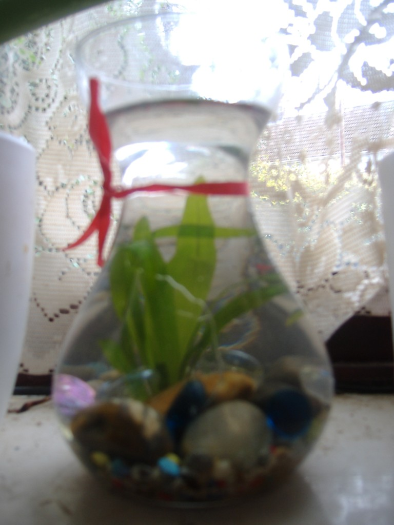 Hyacinth/Tulip vase 2