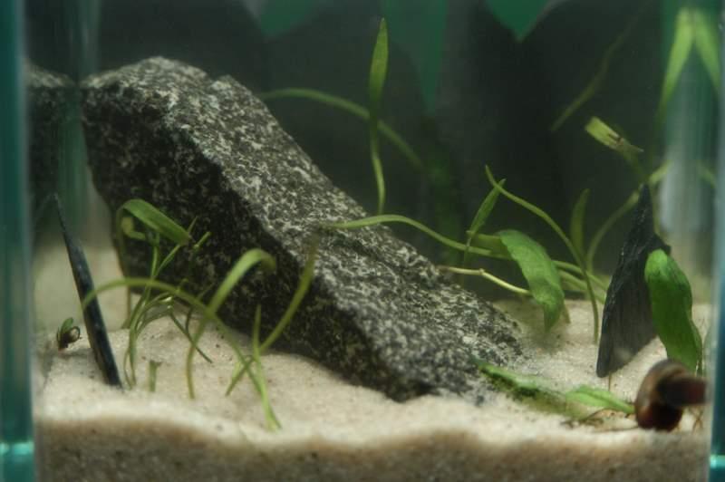 Toms micro tank
