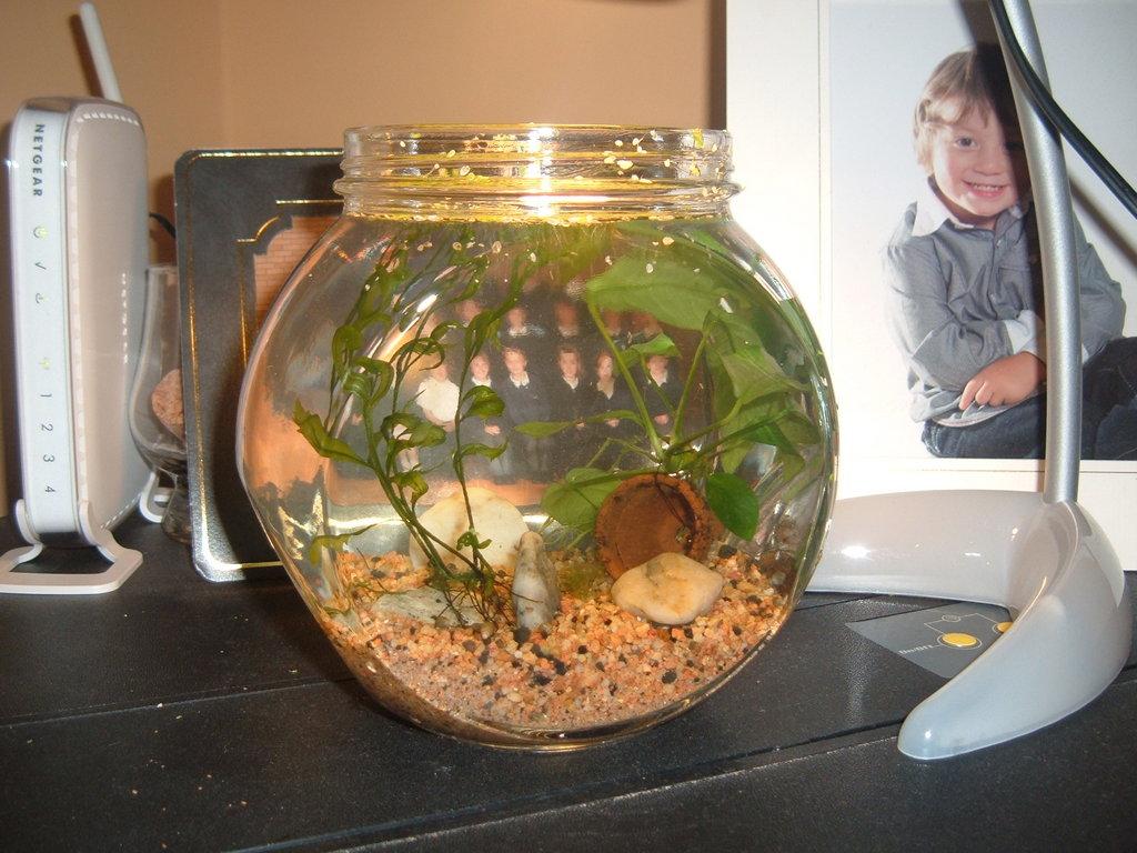 My Nano Planted Tank 2