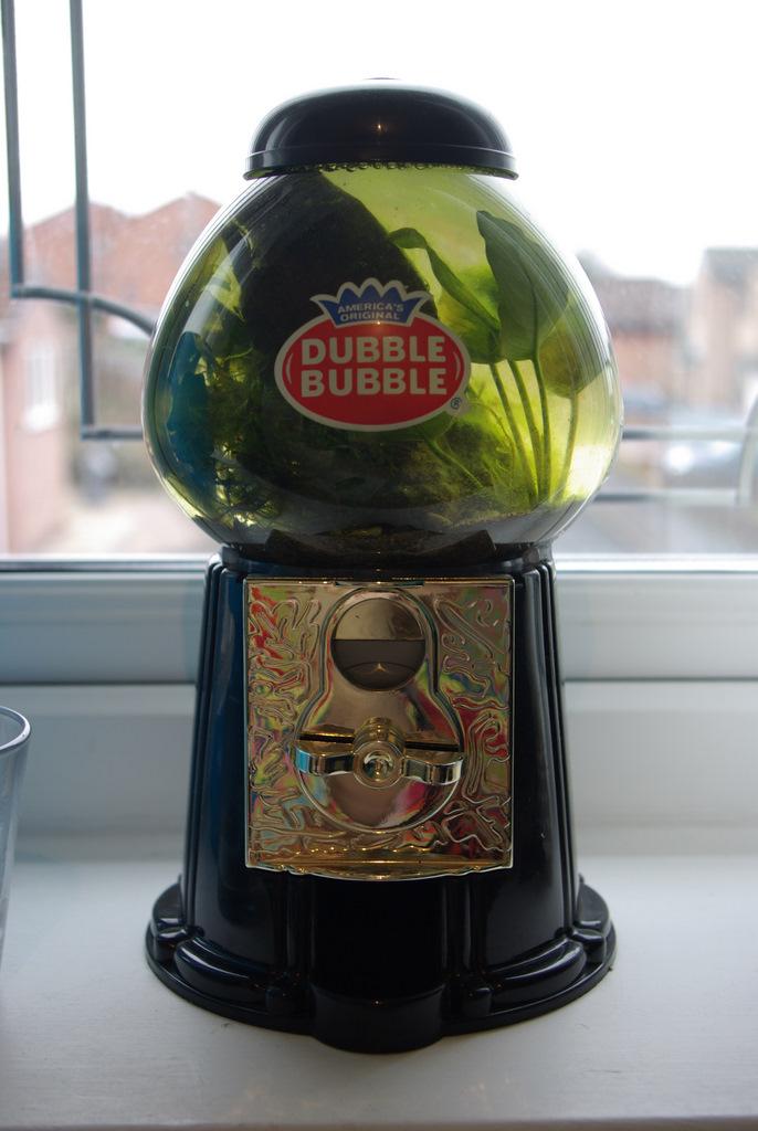 Bubble gum tank - 1 Month on...