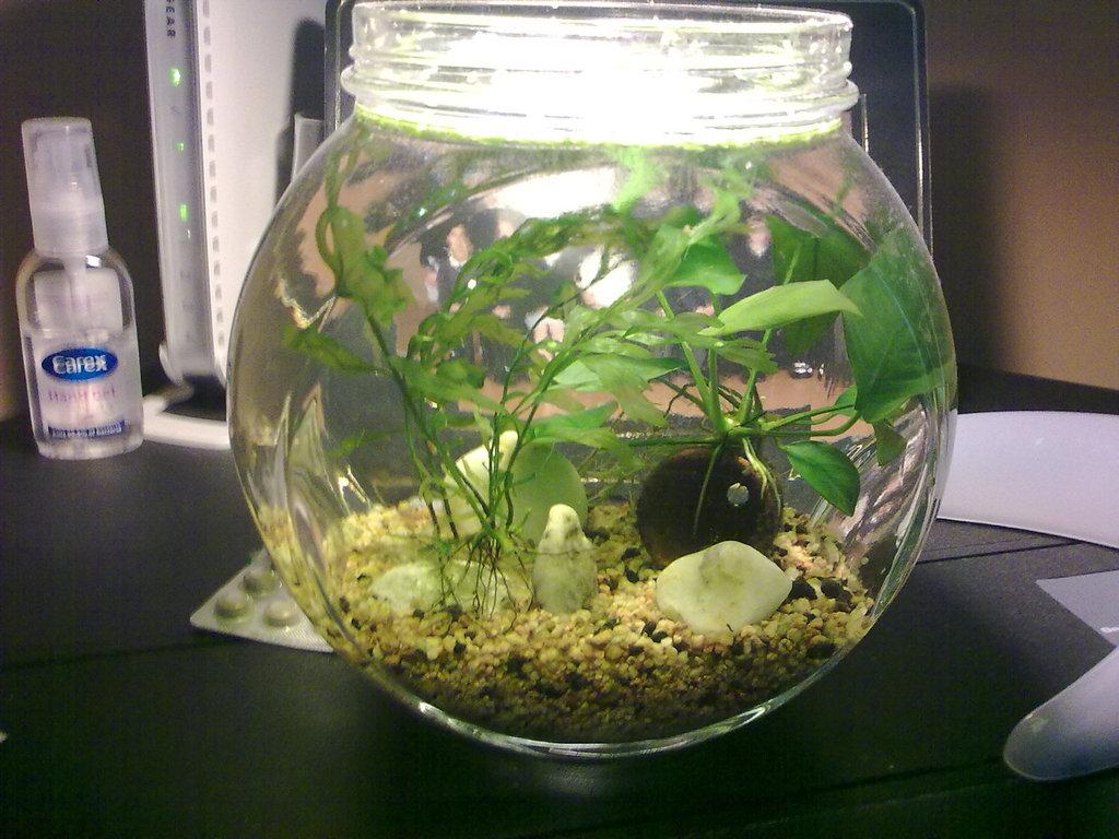 My Nano Tank