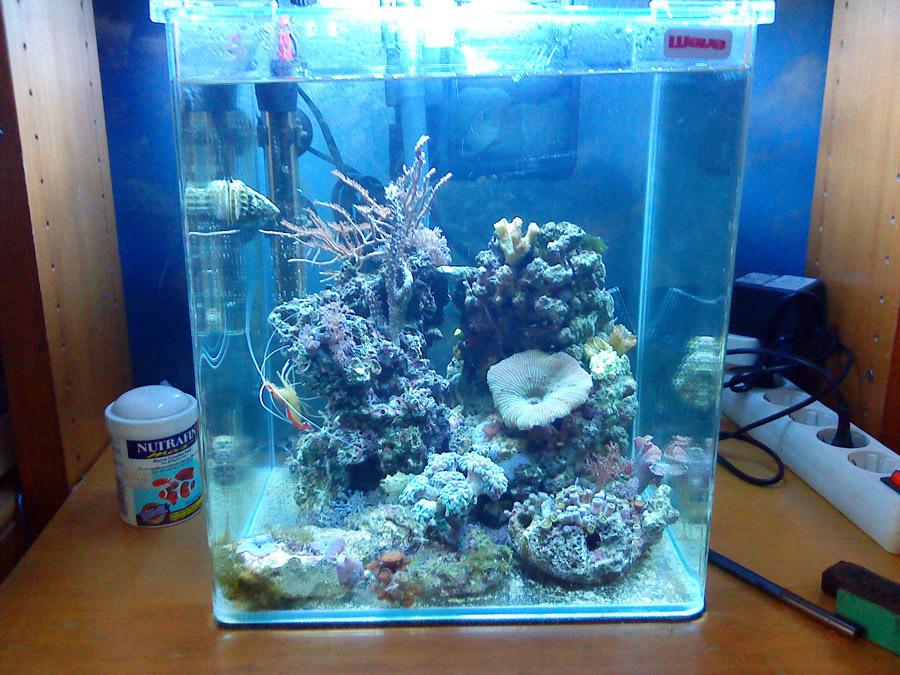 Wave X Cube PICO Reef