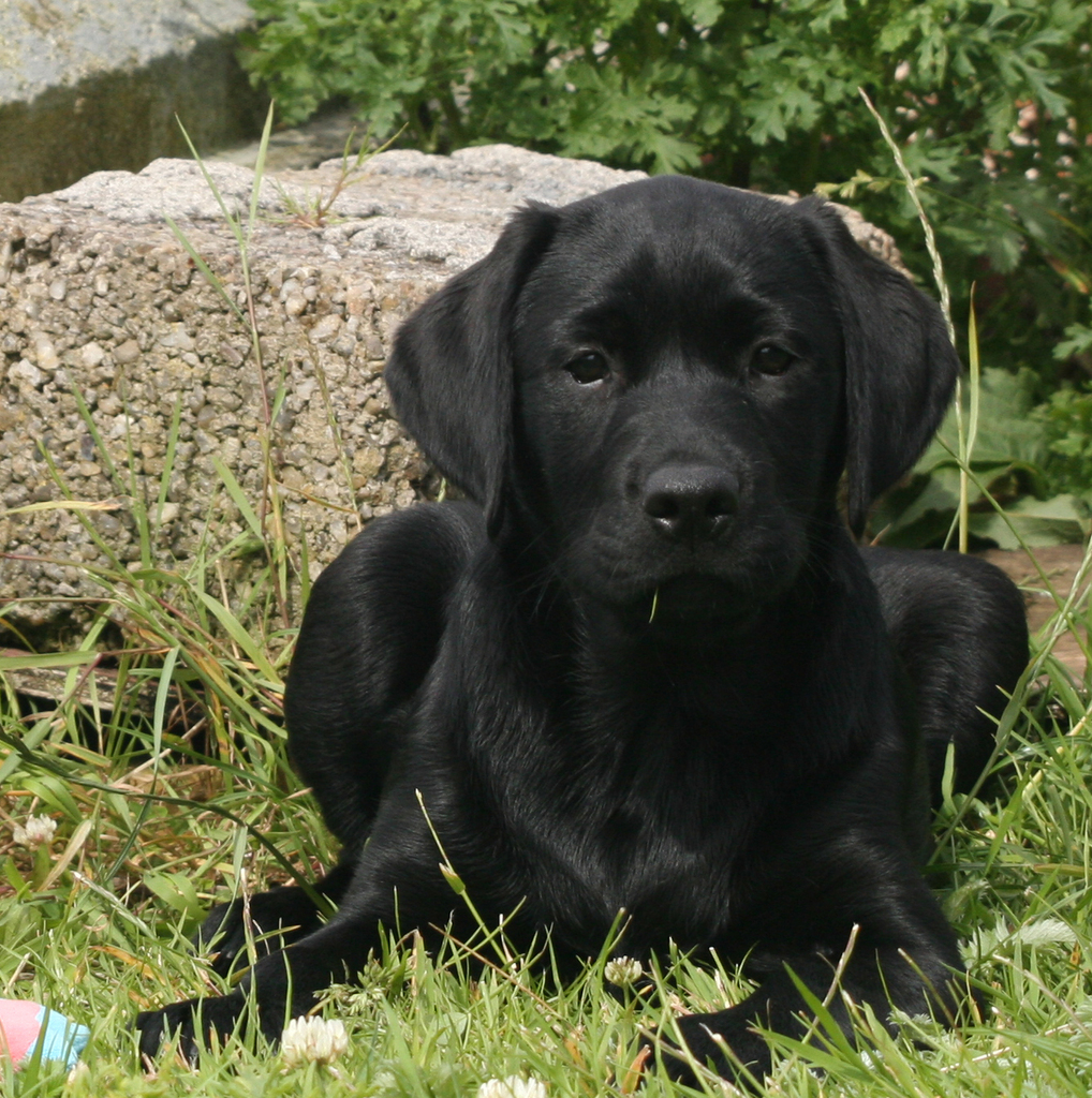 My pup!