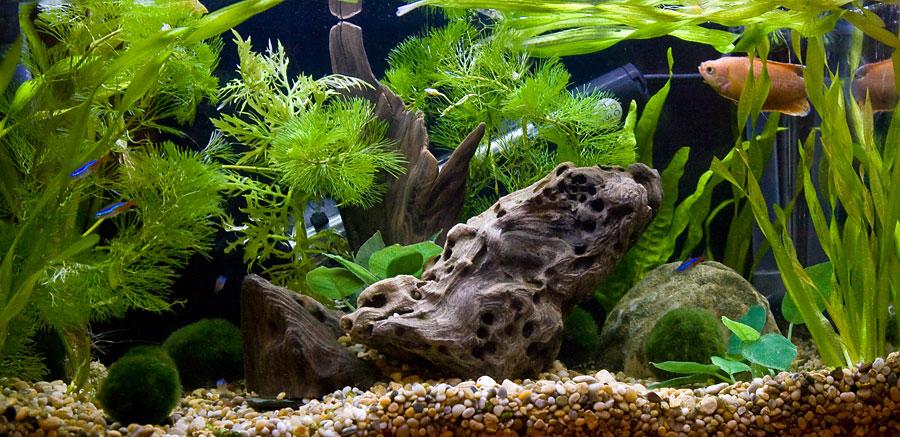 QT gets a background & plants