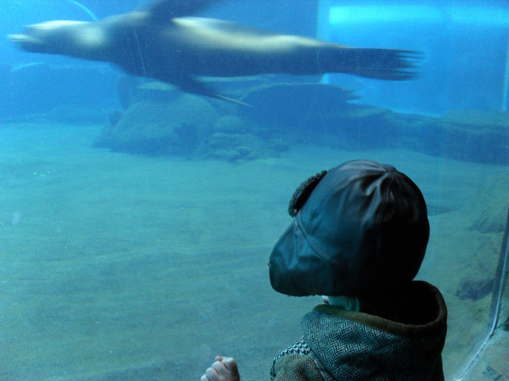 I want to be a sealion when I grow up.
