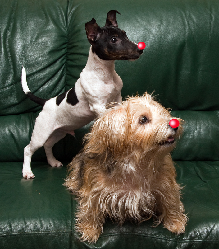 Jealous dogs join in....