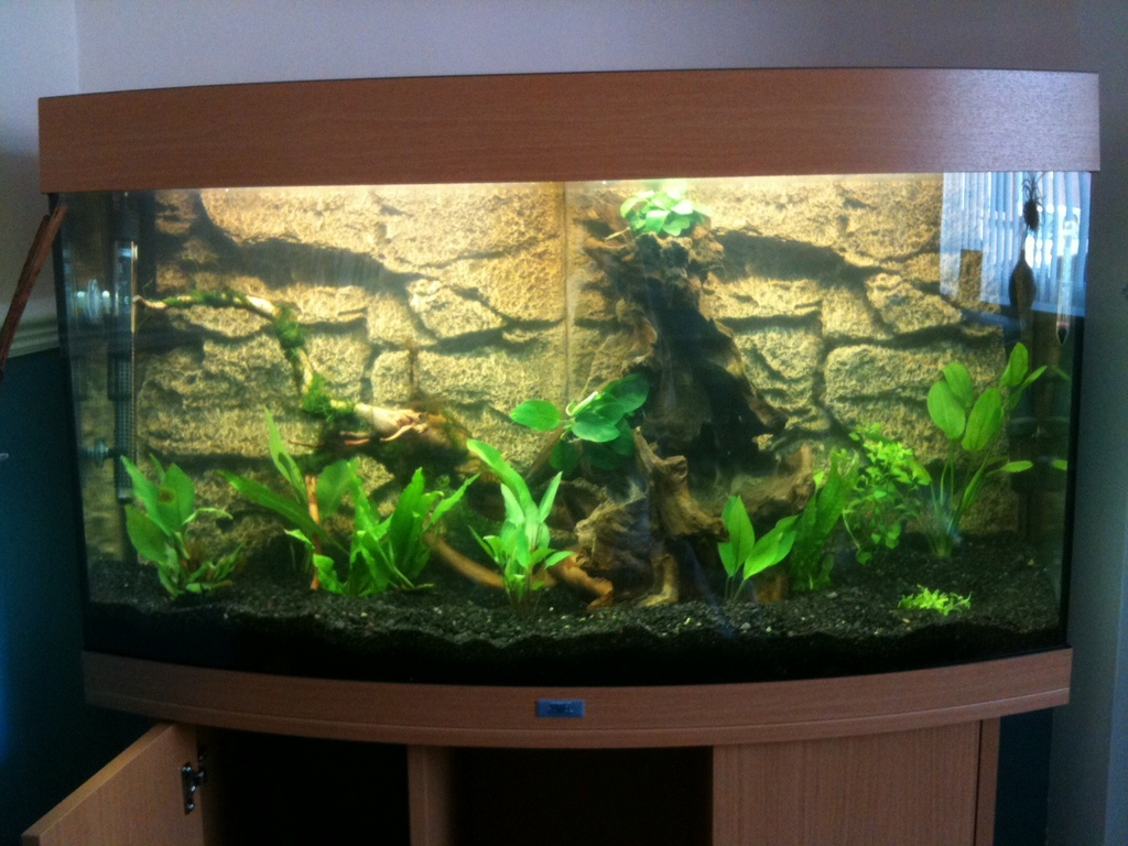 Vanzy's new planted tank - May 2011
