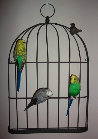 Budgies in the Hall