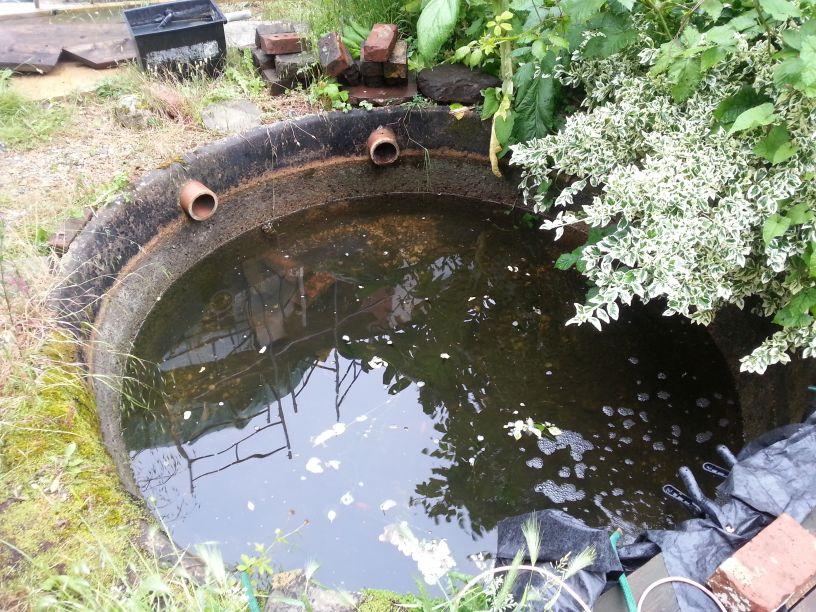 Original Pond 2