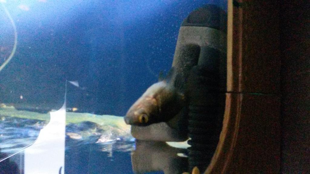 Meet Ocean, offspring of Bubbles and Pop