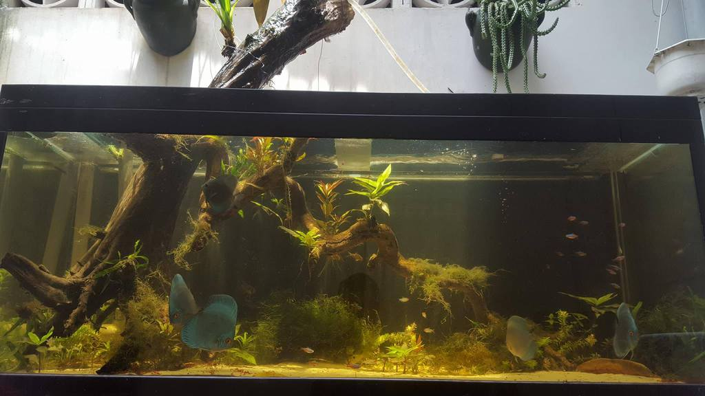400l tank with natural sunlight