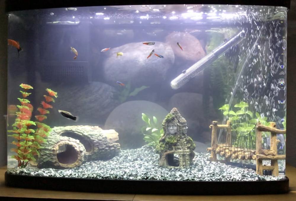 My little fish tank