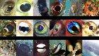 Fish Eyes Quiz