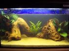 My Tank Newly Setup