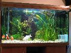 Another one of Suey's tank