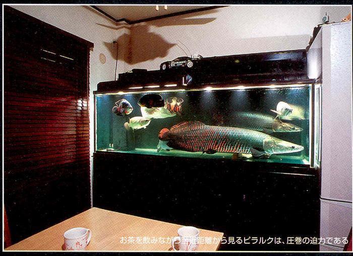 cruel fish keeper