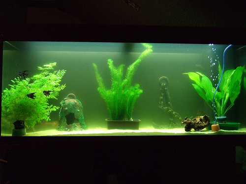 Our tank (back view)