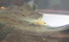 Baby newt