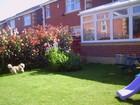 garden pics