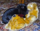 RIP jake my bunny