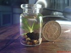 My Micro tank