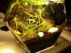 Ducks' micro tank 3