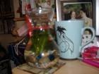 Hyacinth/Tulip vase 1