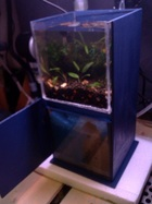 micro tank with sump overflow filter