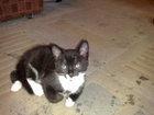 This sheena the new kitten