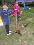 The kids giving the ferrets there first walk.