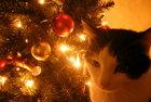 Christmas Onken