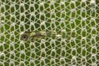 In the net