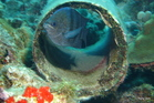 Cute fish in his pipe