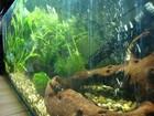 My tank - 11 months on