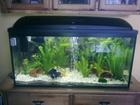 My tanks AquaEL 100 (Goldies)