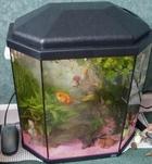Linsay's Rena Tank